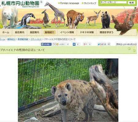 日本动物园闹乌龙 1年内不断逼2只雄土狼交配
