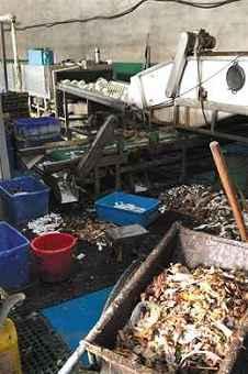 问题消毒餐具生产工厂被查封 涉事企业称仍可继续送货